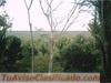 FINCA 440 MANZANAS IDEAL, INDUSTRIA, GANADO, CULTIVOS, LOTIFICACION