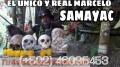 BRUJO MAYA NATIVO DE SAMAYAC GUATEMALA UNICO Y 100% CIENTO REAL +502 46095453